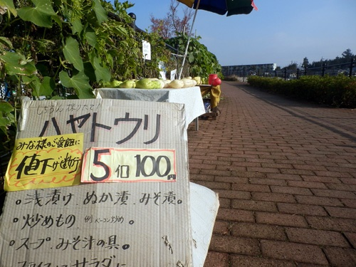 161126hayato.jpg