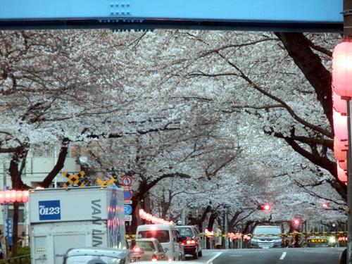 180407sakura.jpg